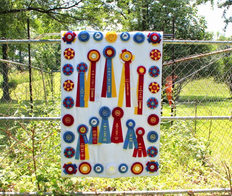 A Horse Quilt of a Different Color